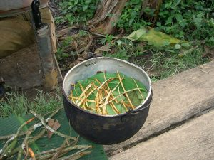 Ayahuascablader før koking. Kilde: Wikimedia Commons.